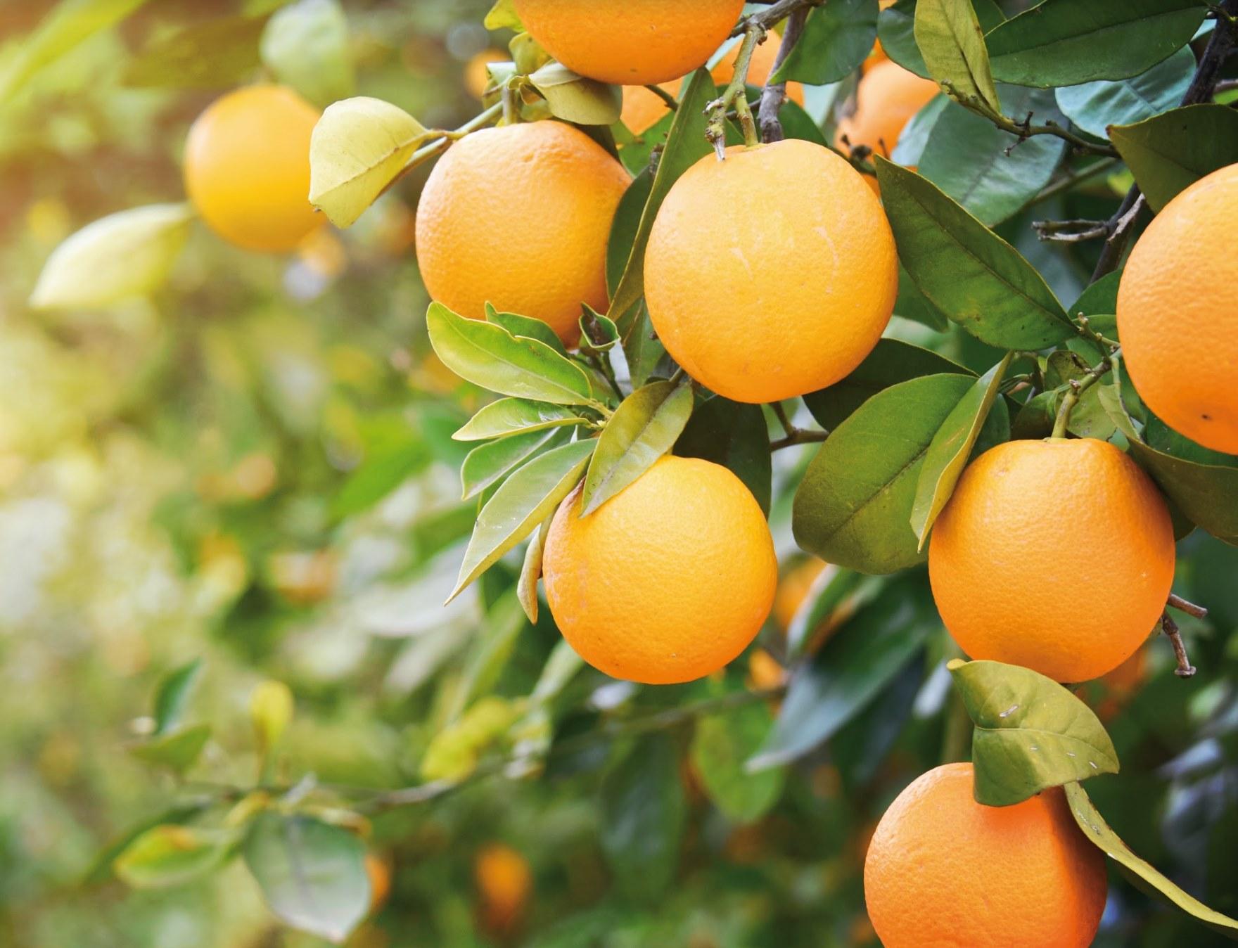 Fertiglobal's aim is to reinforce and nurture crops for their best development